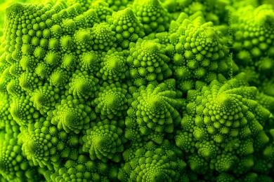 fractal na natureza