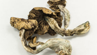 psilocibina cérebro cogumelos
