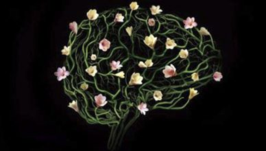 plasticidade_cerebral_perfume