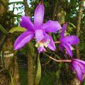 plantar_orquídeas_árvore