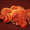 cogumelos anticancerígenos
